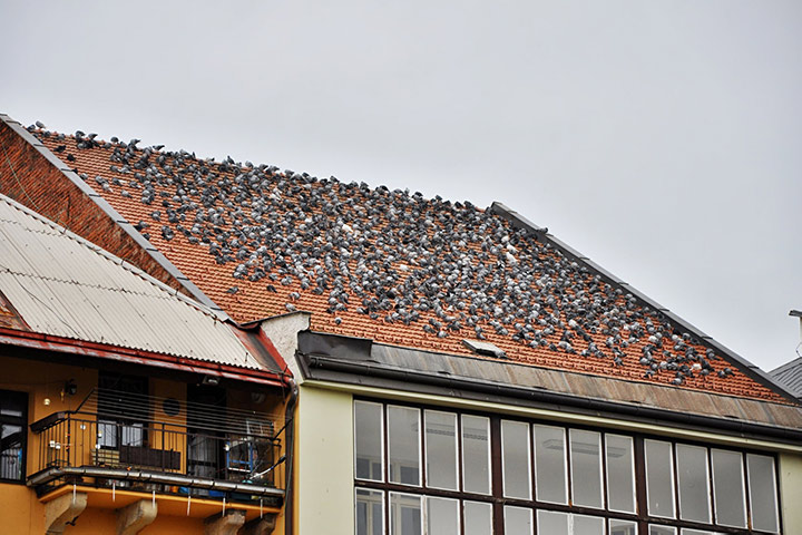 A2B Pest Control are able to install spikes to deter birds from roofs in Ruislip.