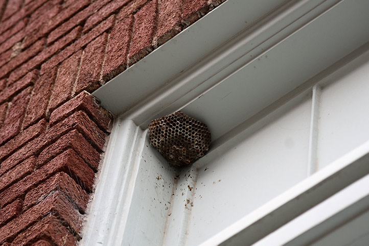 We provide a wasp nest removal service for domestic and commercial properties in Ruislip.